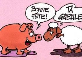 Cochon-et-mouton